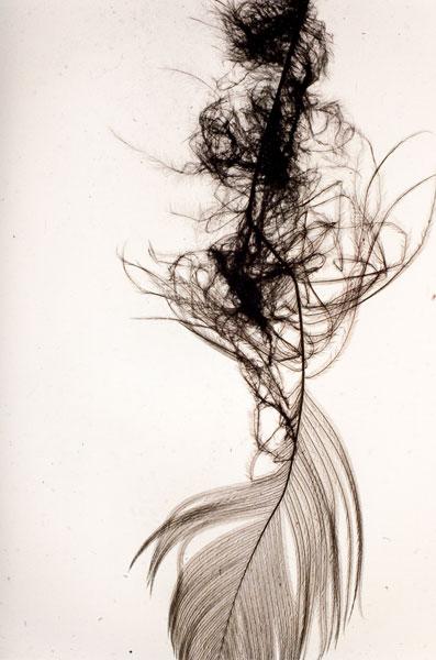 Penas (Feather), detail, series of 20 prints, each 60 x 40 cm, 2010