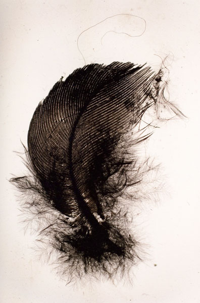 Penas (Feather), detail, series of 20 prints, each 60 x 40 cm, 2010