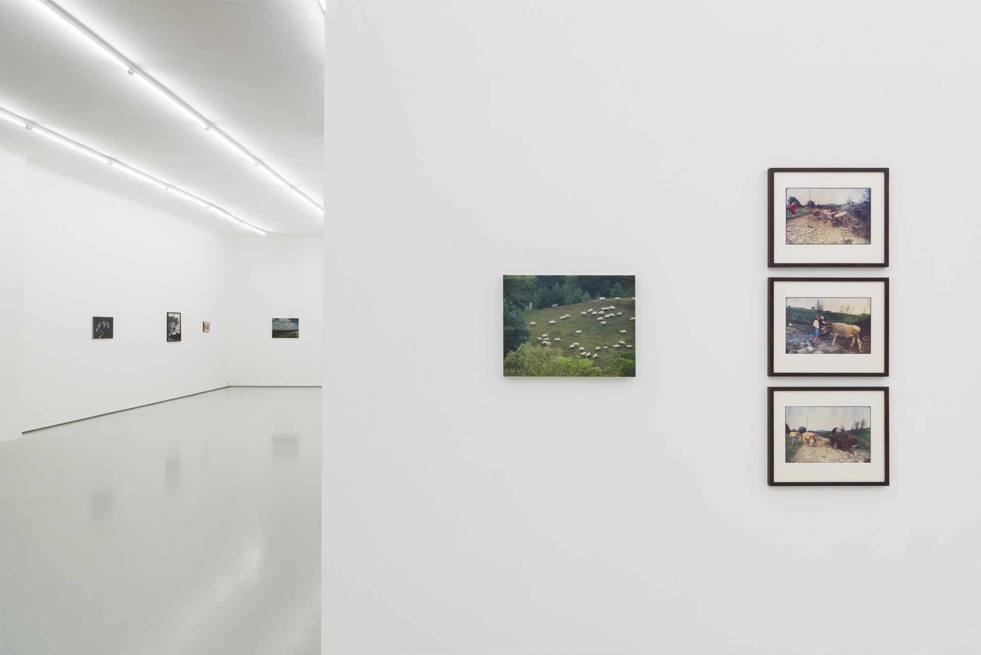 Ion Grigorescu, Commentary upon Nature, exhibition view, Gregor Podnar, 2019. Photo: Marcus Schneider
